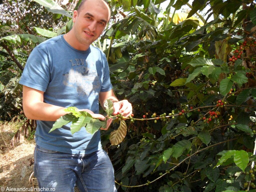 Chiapas - Cafea plantatie