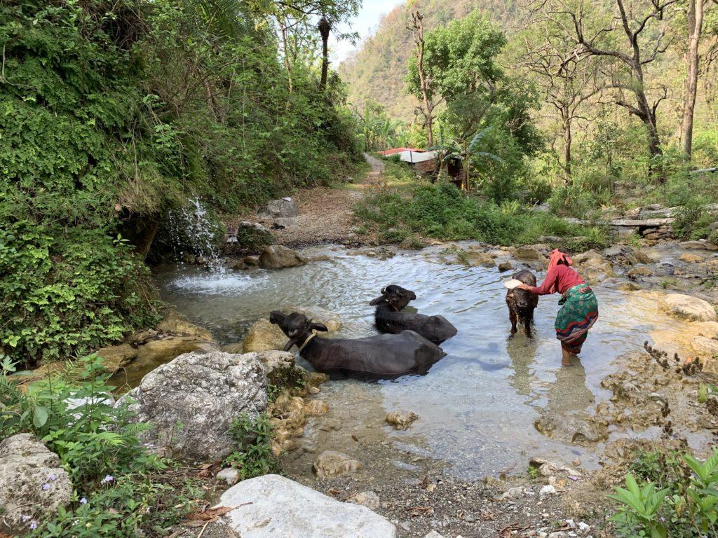 Rishikesh Cascada 2